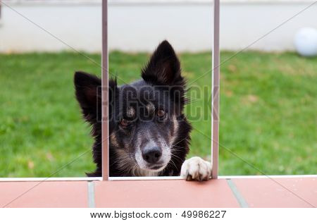 Dog looks through a window