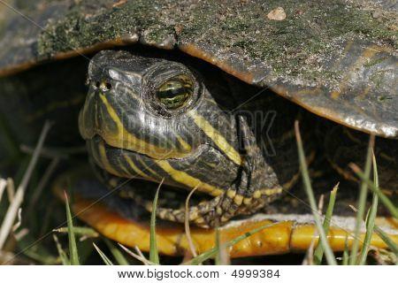 Closeup extrema de la tortuga