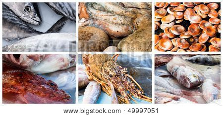 Collage Of Raw Seafood