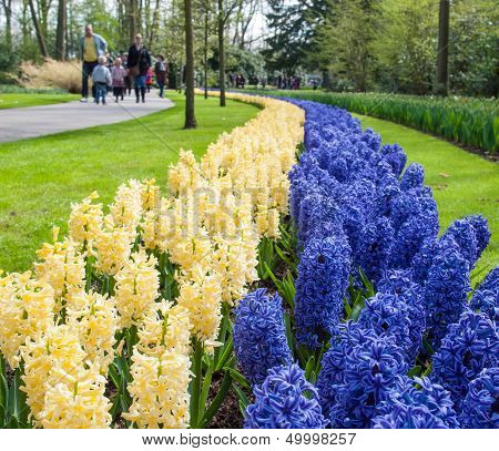 Bed Of Blue And White Hyacinths With Tourists In Background