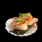 Studio closeup of seared scallops, garnished with pea shoots and served on a bed of asparagus, prese