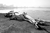 image of driftwood  - A Durban South Africa city skyline in the background with a log of driftwood on grass in the foreground - JPG