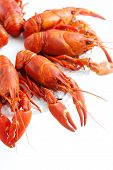 picture of crawfish  - Fresh boiled crawfish on white isolated background - JPG