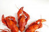 stock photo of craw  - Fresh boiled crawfish on white isolated background - JPG