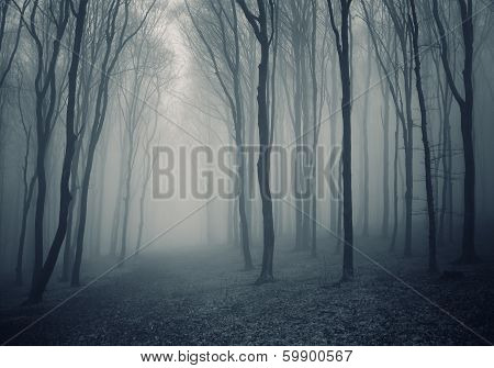 Trees in a dark forest with fog