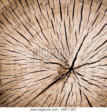 wooden old slice, natural texture