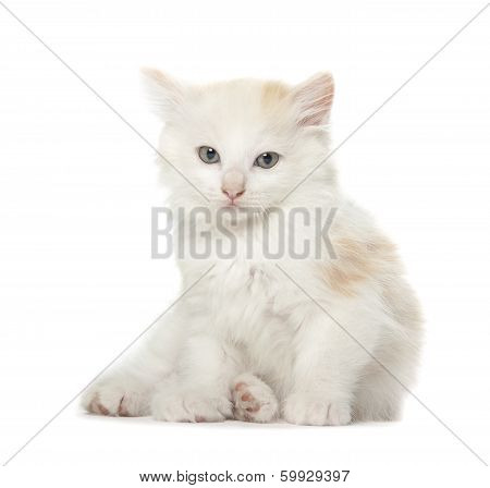 Laying Kitten Isolated Over White Background