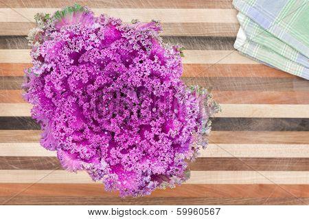Ornamental Curly-leaf Purple Kale