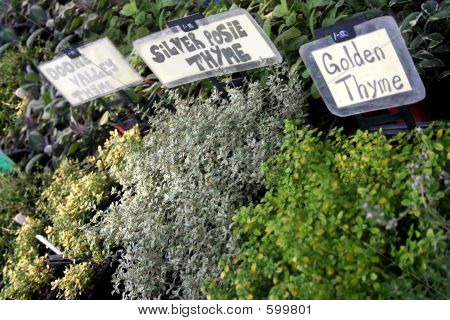 Fresh Garden Herbs At Market