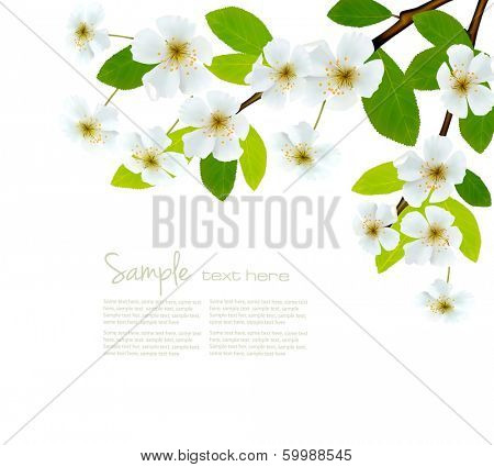 Nature spring background with blossom branch with spring flowers. Vector illustration