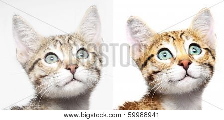 Cute kitten looking up before and after computer retouching