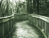 foto of swamps  - Boardwalk in swamp - JPG