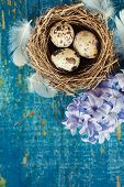 Quail eggs with feathers