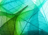 image of macro  - Macro leaves background texture - JPG
