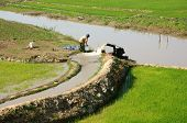 Farmer  Pump Water To Rice Field
