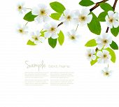 Nature spring background with blossom branch with spring flowers. Vector illustration poster