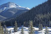 image of snowy hill  - Colorado Countryside - JPG