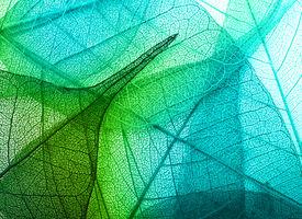 pic of garden-art  - Macro leaves background texture - JPG