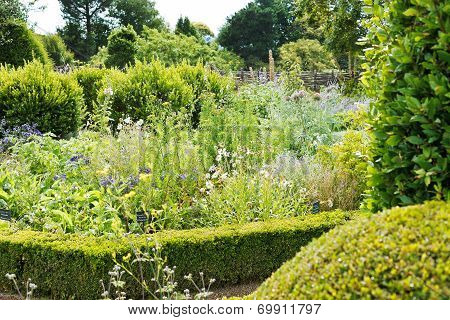 Botanical Garden With Herbs In Angers Castle