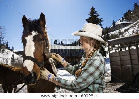 Attractive Young Woman Grooming Horse