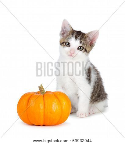 Cute Kitten With Mini Pumpkin On White.