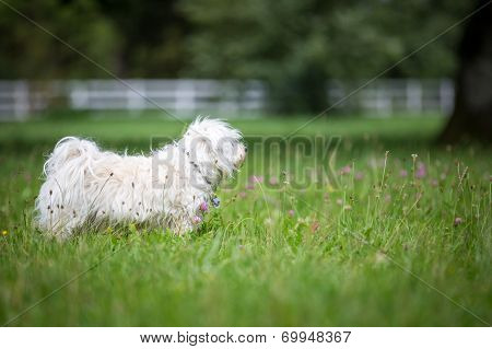 Dog In A Meadow