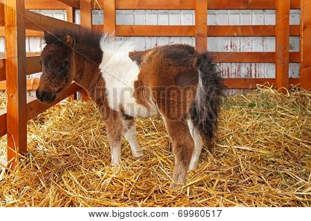 Newborn Pony