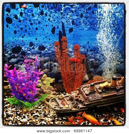 Fish tank with Fish - With Instagram effect