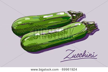 Vector hand drawing realistic juicy  zucchini