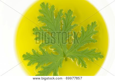 A citronella plant leaf resting in oil to make homemade mosquito repellant