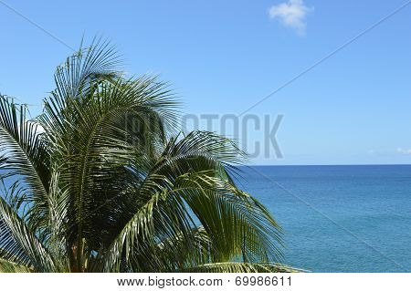 Palmtree And Sea