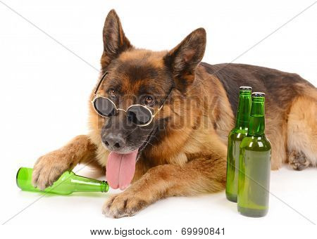 Funny cute dog with bottles of beer isolated on white