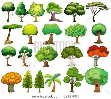 Illustration of the set of trees on a white background