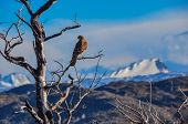 stock photo of pain-tree  - Pray bird in Parque Nacional Torres del Paine Chile. ** Note: Soft Focus at 100%, best at smaller sizes - JPG