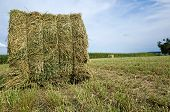 picture of alfalfa  - Dried alfalfa bale waiting for storage - JPG