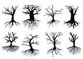 foto of dead plant  - Black bare tree silhouettes with roots isolated over white background - JPG