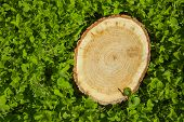 stock photo of disafforestation  - tree stump on the green grass - JPG