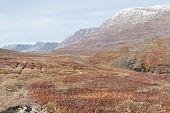 image of arctic landscape  - Arctic landscape in Greenland on Disko Island in summer - JPG