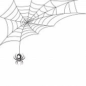 picture of black widow spider  - Poisonous spider web Halloween symbol wallpaper template vector illustration - JPG