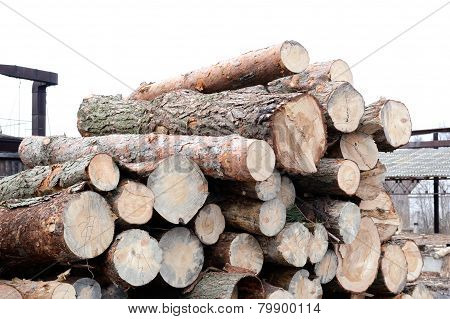 Freshly cut tree pine logs outdoors at winter