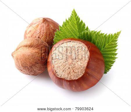 Hazelnuts with kernels