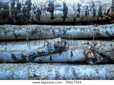 The texture of the birch wood.