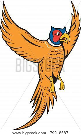 Pheasant Bird Fowl Flying Cartoon