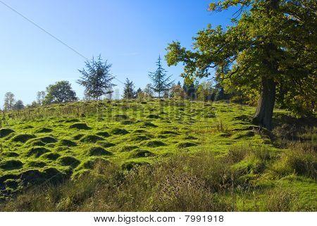 El inglés Moorland