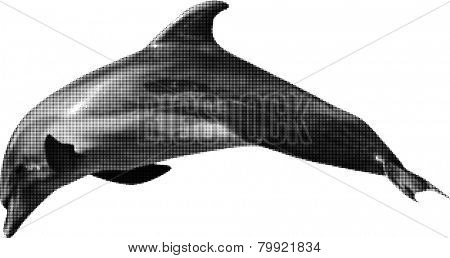 illustration with grey dolphin from dots isolated on white background