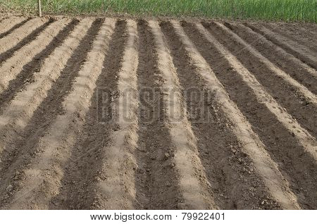 Plowed Field In The Northern Bulgaria In The Summer