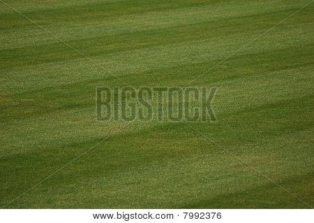 Baseball Outfield Grass