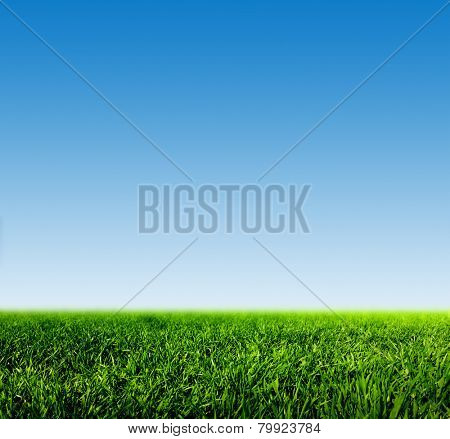 Green grass on spring field against blue clear sky. HD quality, perfect for background, nature theme etc.