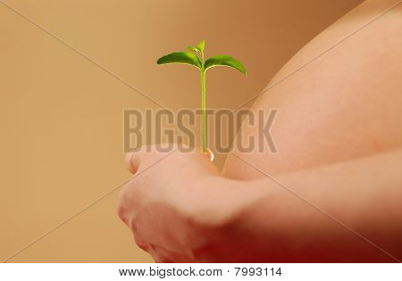 Pregnant woman with plant