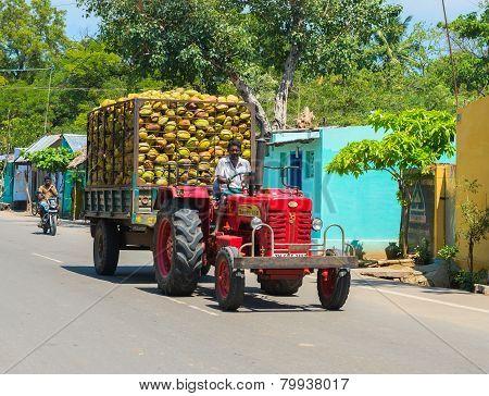 Madurai, India - February 17: Indian Rural Man Rides On A Car With Coconuts. India, Tamil Nadu, Near
